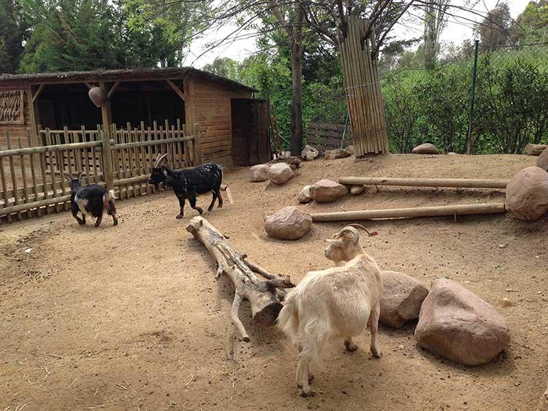 Animales-de-la-granja